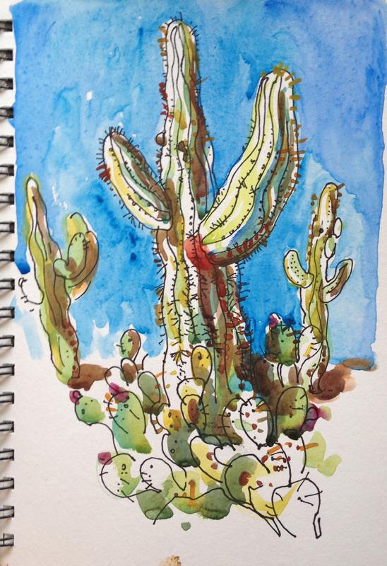 tuscon-saguaro