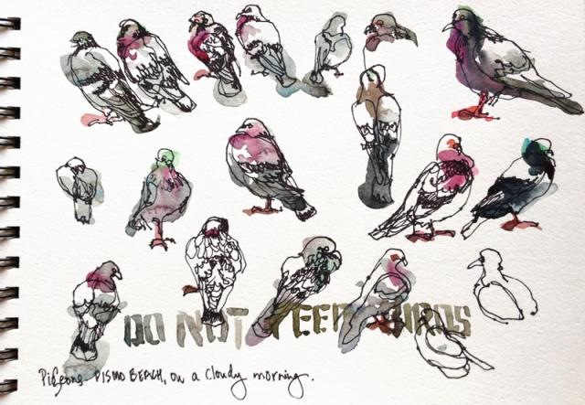 pismo_pigeons