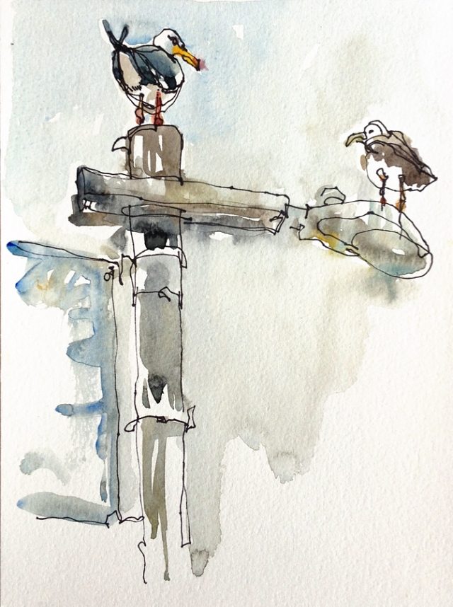 pismo_seagulls