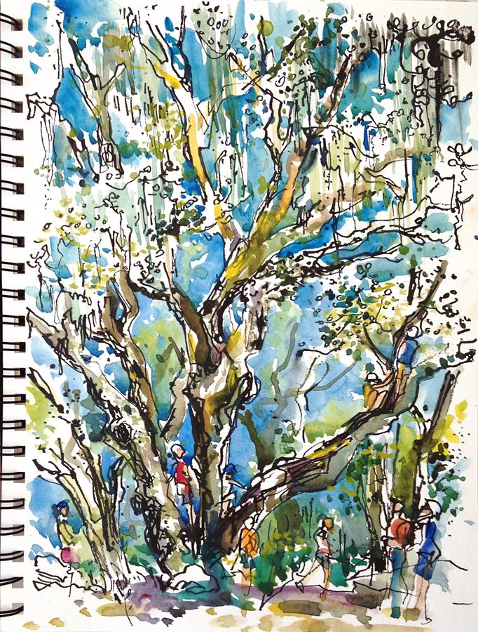 Oak Trees. 3 takes