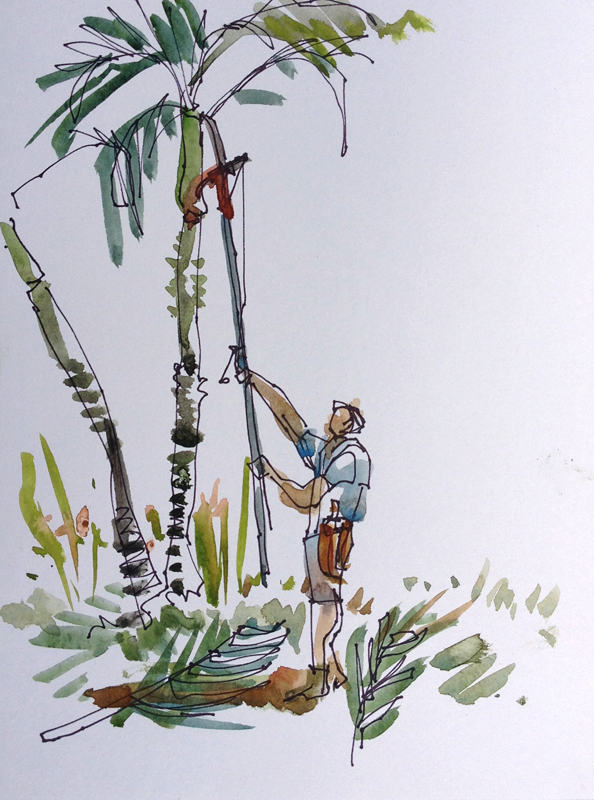 CR_manuel_antonio_pruning_palms