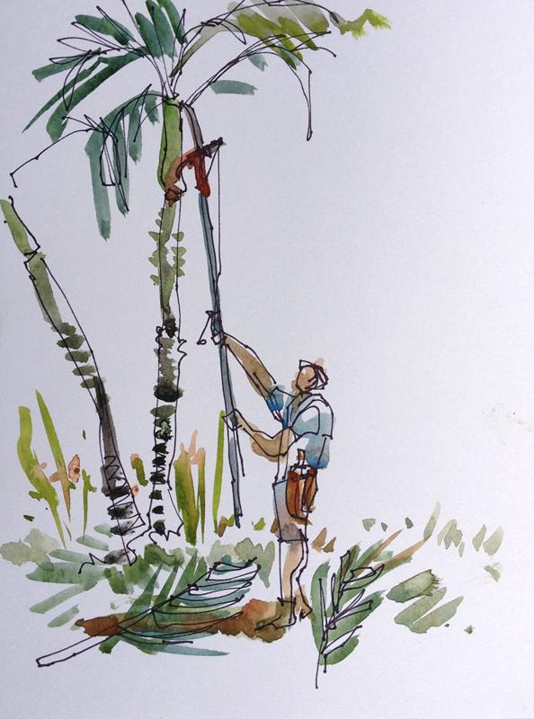 CR_manuel_antonio_pruning_palms