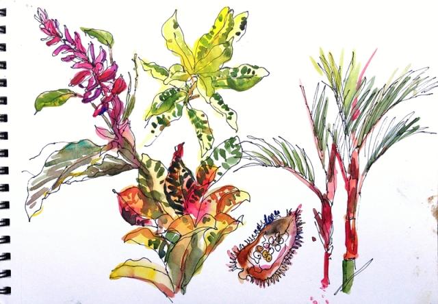 CR_plants1_tortuguero