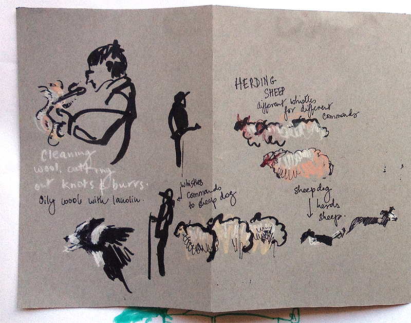 sheep_shearing_long_1of2