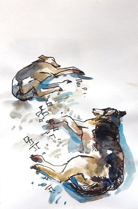 stray_dogs_kala_academy