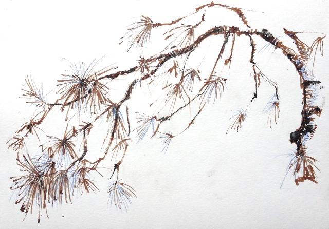 yosemite_pine