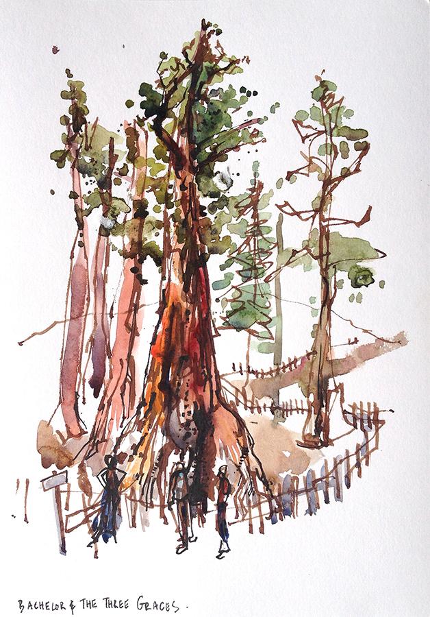 yosemite_sequoia_redwood