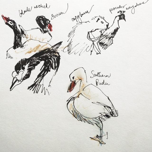 zoo_ducks