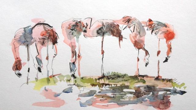 zoo_flamingo2