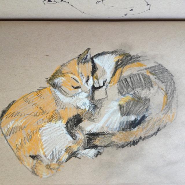 catssleeping