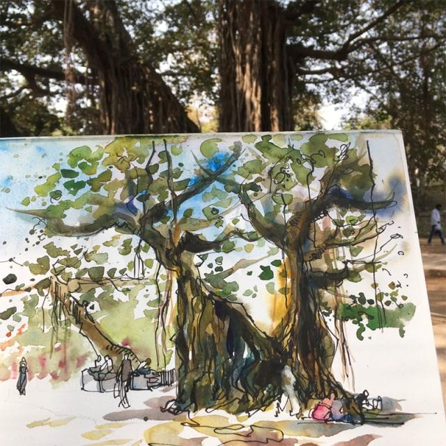 pune_tree