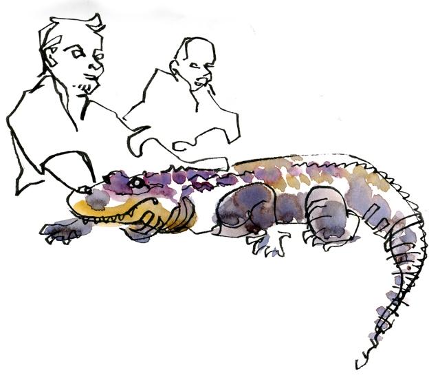 hhpz_alligator1