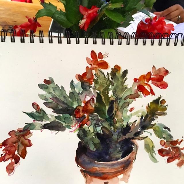 christmas_cactus_1