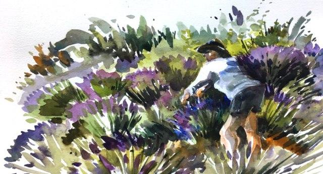 dw24_lavender1