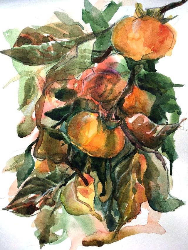 persimmon_tree