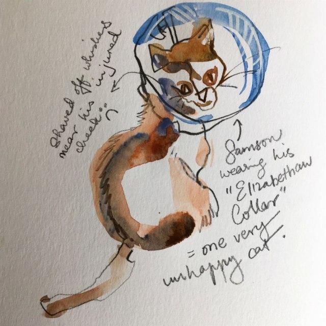 cat_collar
