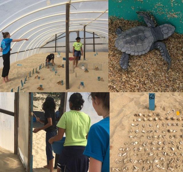 turtles_photo